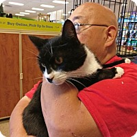Adopt A Pet :: Domino - Avon, OH