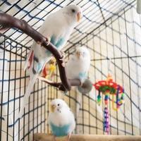Adopt A Pet :: Bubli - Lowell, MA