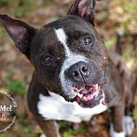 Adopt A Pet :: Indy - Ft. Lauderdale, FL