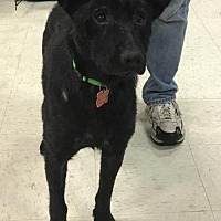 Adopt A Pet :: Timothy - Maple Grove, MN