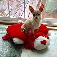 Adopt A Pet :: Tiny - Great Bend, KS