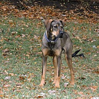 Adopt A Pet :: Riley - Manhattan, KS