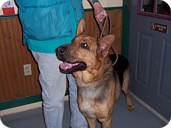 German Shepherd Dog Dog for adoption in Tully, New York - HOOCH