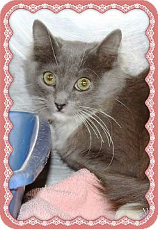 Domestic Shorthair Kitten for adoption in Marietta, Georgia - LADY