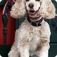 Adopt A Pet :: Zoey - Sugarland, TX
