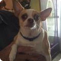Adopt A Pet :: Sandy Jackson - Shawnee Mission, KS