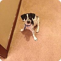 Adopt A Pet :: Sparkles - Brick, NJ
