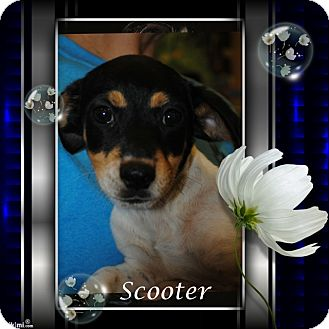 Terrier (Unknown Type, Medium) Mix Dog for adoption in Crowley, Louisiana - Scooter