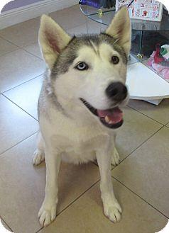 Husky Mix Dog for adoption in Birmingham, Alabama - Luna