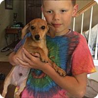 Adopt A Pet :: Wiener :) - Flower Mound, TX