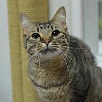 Adopt A Pet :: Addie 12193 - Atlanta, GA