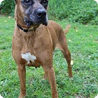 Adopt A Pet :: Lottie - Boca Raton, FL