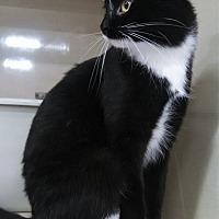 Adopt A Pet :: Phoenix - St Paul, MN