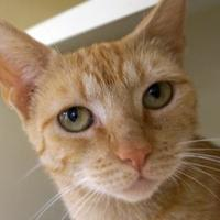 Adopt A Pet :: Ms. Marigold - Verona, WI