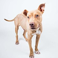 Adopt A Pet :: Packer - Decatur, GA