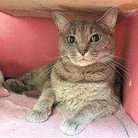 Adopt A Pet :: June - Lynchburg, VA