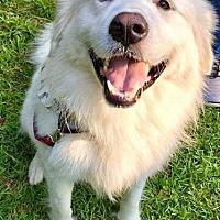 Adopt A Pet :: Velcro in AL - new! - Beacon, NY
