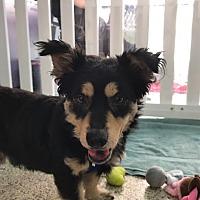 Adopt A Pet :: Pumpkin - Thousand Oaks, CA