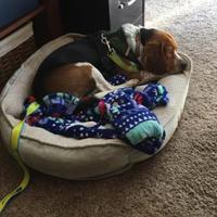 Adopt A Pet :: Maxwell - Batavia, OH
