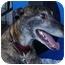 Photo 3 - Greyhound Dog for adoption in Santa Rosa, California - Joe