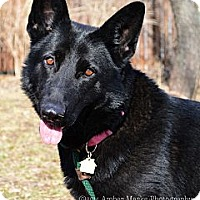 Adopt A Pet :: Letty - Indianapolis, IN