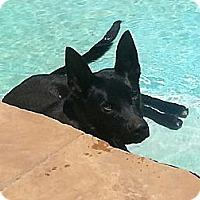 Adopt A Pet :: Maxx - San Diego, CA