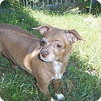 Adopt A Pet :: Princess - Mount Kisco, NY