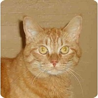 Adopt A Pet :: Tabitha - Elmira, ON