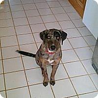 Adopt A Pet :: Stephanie - Conway, AR