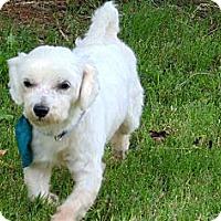 Adopt A Pet :: Casanova - Crystal River, FL