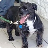 Adopt A Pet :: Sherwood - Rockaway, NJ