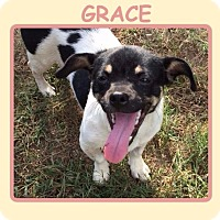 Adopt A Pet :: GRACE - Dallas, NC
