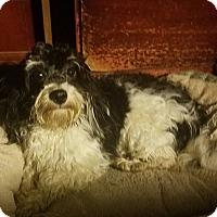 Adopt A Pet :: Oreo - Detroit, MI