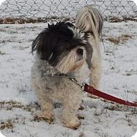 Adopt A Pet :: Mackie - Mississauga, ON