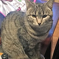 Adopt A Pet :: PRIUS - Acme, PA