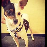 Adopt A Pet :: Bentley - Grand Bay, AL