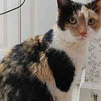 Adopt A Pet :: Stella - Lexington, NC