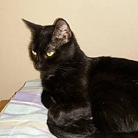 Adopt A Pet :: Jackie - Enid, OK