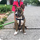Adopt A Pet :: Penny Lane