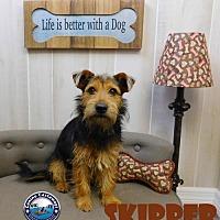 Adopt A Pet :: Skipper - Arcadia, FL