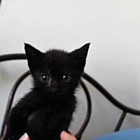 Adopt A Pet :: Roo - New York, NY