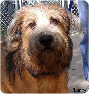 Terrier (Unknown Type, Medium) Mix Dog for adoption in Key Largo, Florida - Larry