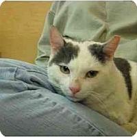 Adopt A Pet :: Mr. Rodgers - Jenkintown, PA