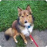 Adopt A Pet :: Alex - Indiana, IN
