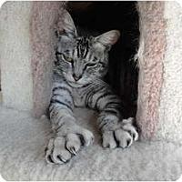 Adopt A Pet :: Silk - Kingston, WA