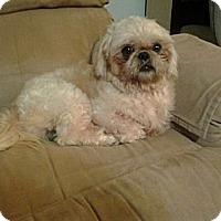 Adopt A Pet :: Reggie - Hilliard, OH