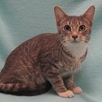 Adopt A Pet :: Richard - Redwood Falls, MN