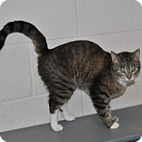 Adopt A Pet :: Lucky Socks - Parsons, KS