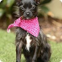 Adopt A Pet :: Maggie May - Rancho Palos Verdes, CA