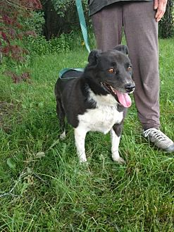 Border Collie Mix Dog for adoption in Logan, Utah - Rounder
